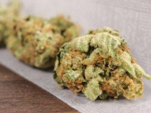 marijuana_22