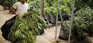 IRAN-legalise-cannabis-758x350