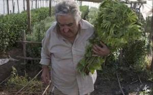 jose-mujica-weed
