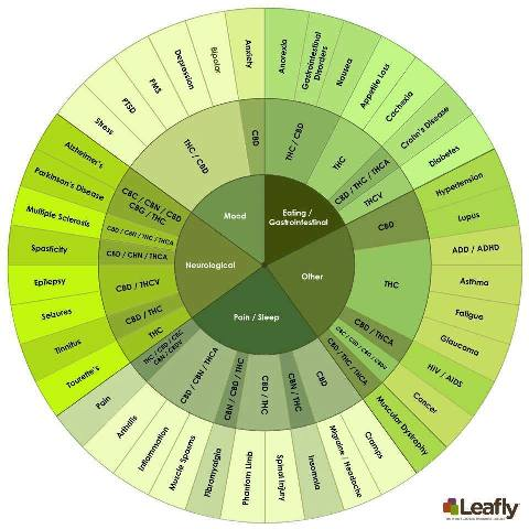 cannaboind-wheel_web_large